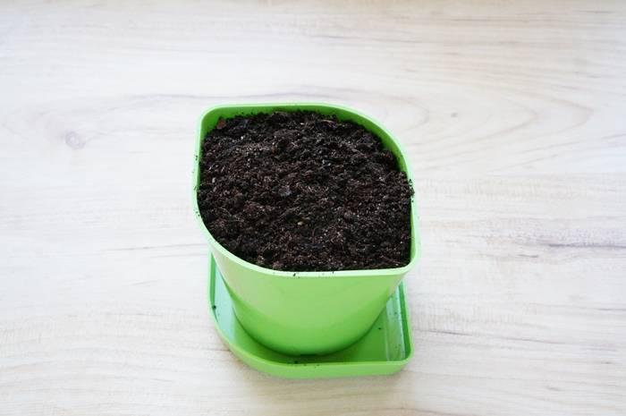 Домашний огород - источник специй и трав