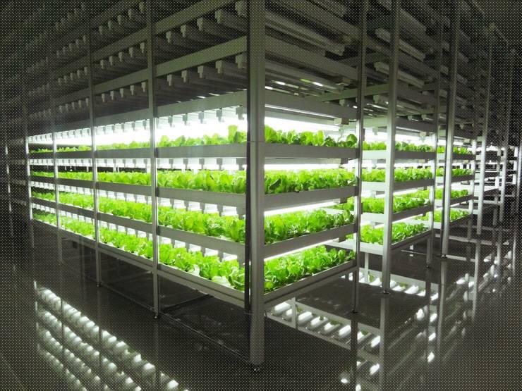 Вертикальное выращивание клубники в модулях 70