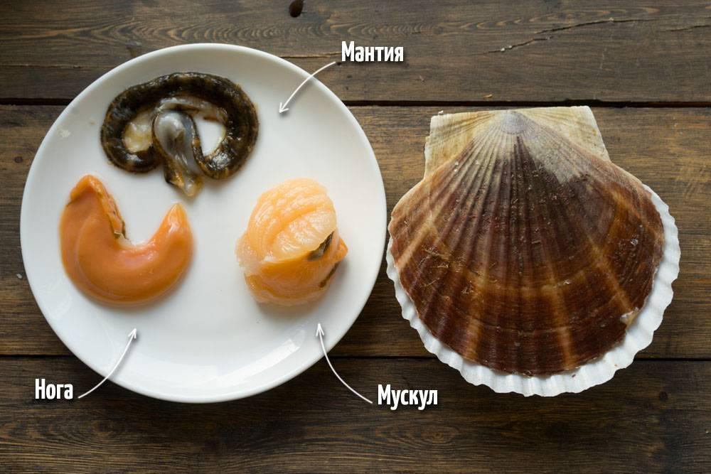 Морской гребешок, рецепт приготовления, как открыть и почистить гребешок, гребешок с беконом и лимонным соком, пошаговый рецепт с фото, блог andychef.ru