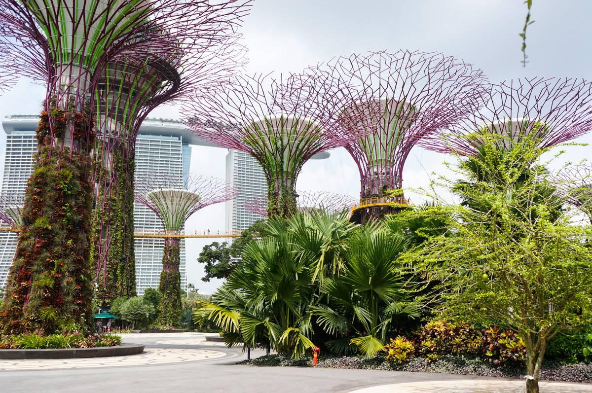Путешествие в Сингапур, что посмотреть в Сингапуре, достопримечательности, рестораны Сингапура, Зоопарк Сингапура, Сентоза, фотографии, блог о путешествиях andychef.ru